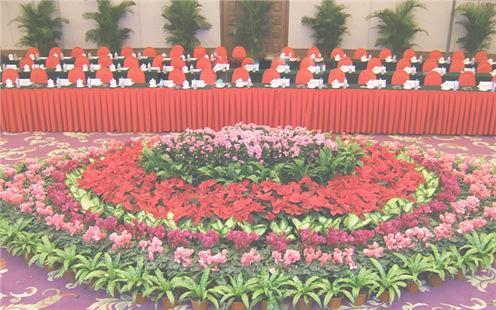 壁纸 成片种植 风景 花 植物 种植基地 桌面 496_310